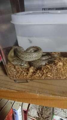 日本のヘビのネーミングセンスwwww