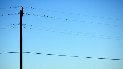 なぜ日本では「電線の地中化」が進んでいないのか?電柱愛好家がいるのは日本だけ!