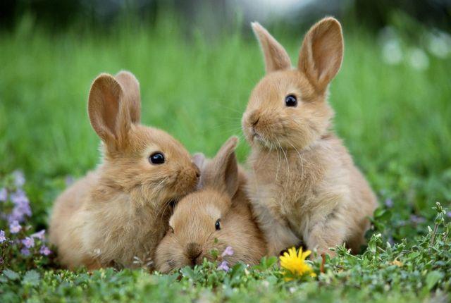 【画像】Amazonにウサギが売ってるんやけど