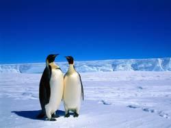 【画像あり】南極で遭難して無事帰還した奴らが乗って帰ってきた船ショボすぎワロタwwwwwwwwwwwwwww