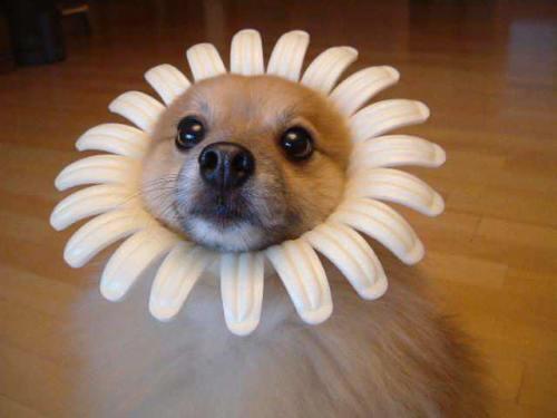かわいいいと思う犬の画像を貼っていくスレwwwwwwwwwwwwwwwwww