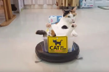 【画像】ネコはいつ、どこから来たの?