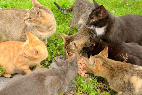 野良猫にエサをあげる「猫おばさん」 やめさせるにはどうする?
