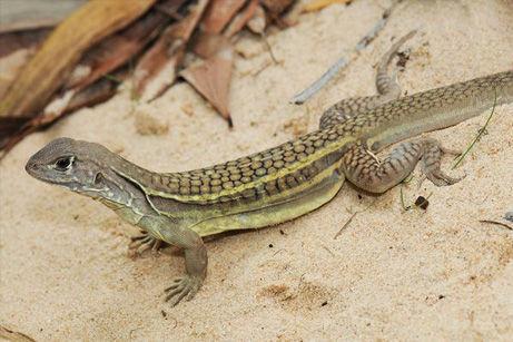 【画像】メコン川流域で新種163種が発見される!虹色の頭をもつヘビも