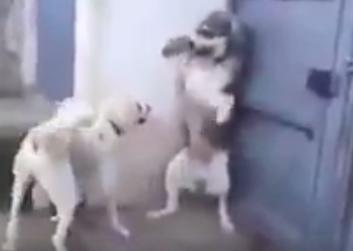 【画像】父犬が子犬をビックリさせ、それを見た母犬が父犬に叱っている様子。
