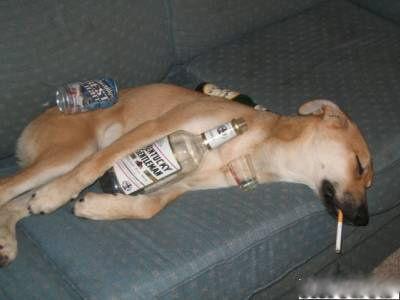 モテる男性ほどお酒を飲むことが判明!交際経験ゼロの人はお酒嫌いが多い