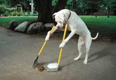 【画像】犬の糞を自動で回収してくれる便利グッズが登場!