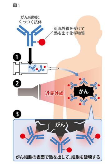 日本人研究者がガン細胞が1日で消滅させる治療法を開発!転移したガンも治す。全身のがんの8~9割はこの治療方でカバーでき、2~3年後に実用化を目指す