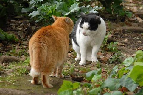 謎が多い「猫の集会」…群れを嫌う動物なのに、わざわざ集まるのは何故か?