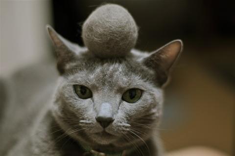 【画像】アニマルレスキューに保護された巨大な毛玉だらけのネコが話題に!