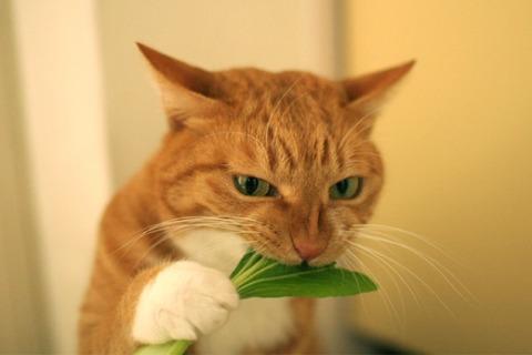 俺はベジタリアンだけどさ、なんでお前ら動物殺しても平気なの?