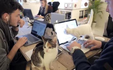 恵まれない猫を育てる社員に、月5000円の猫手当を支給する会社が話題に wwwww