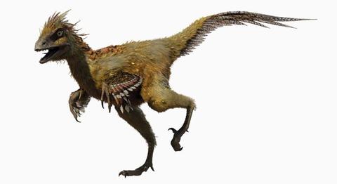 【古生物】9900万年前の琥珀の中から羽毛に覆われた恐竜のしっぽ発見