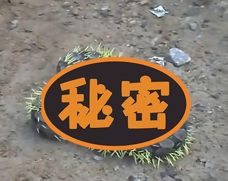 """【ぎゃあ""""】ヘビ、何も考えず「ヤマアラシ」を食べようとした結果!"""