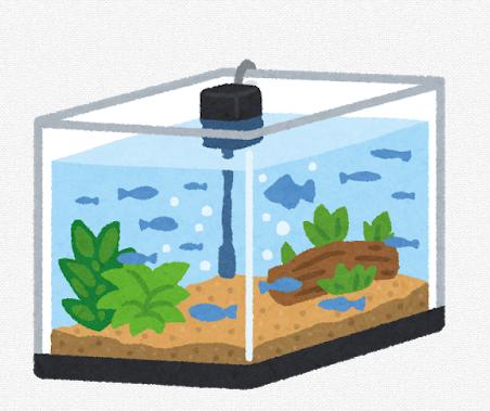 【画像】総予算一万円で作った俺の水槽見てくれ