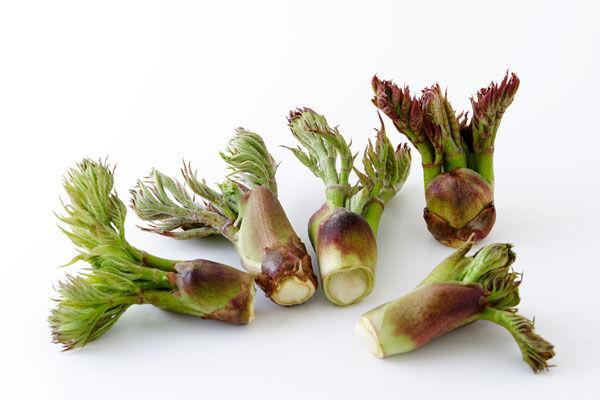 「タラの芽」「ふきのとう」「春菊」とかいう食通ぶりたいええ格好しいしか好まない食べ物wwwww