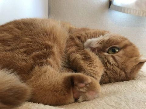 平成最後の日に、うちの猫が見ていかないか?