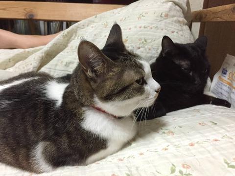 【猫画像大量】暇だからうちの猫を見せびらかしたい