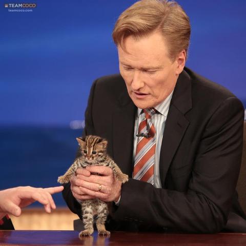 これがアジアンベンガル山猫の子猫らしい