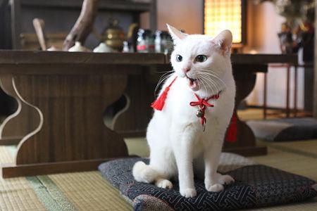 猫に弱い強面剣士描く『猫侍』再び、北村一輝主演でドラマ&映画の続編決定