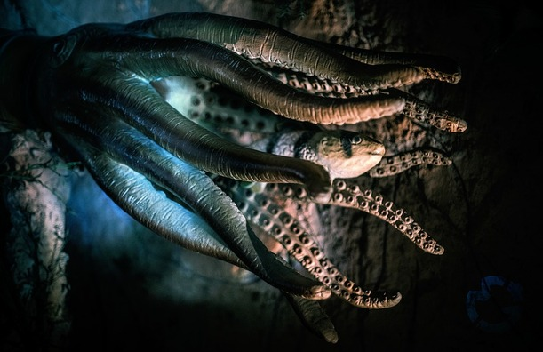 octopus-2745286_960_720