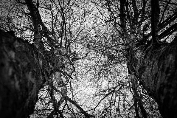 trees-4765737_960_720