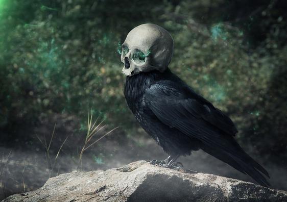 raven-3742189_960_720