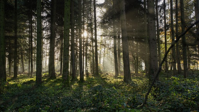forest-4644759_960_720