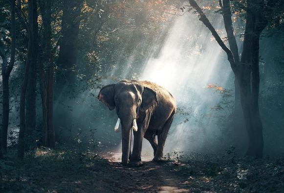 elephant-1822636_960_720