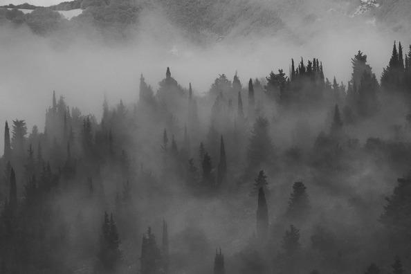 fog-4247784_960_720