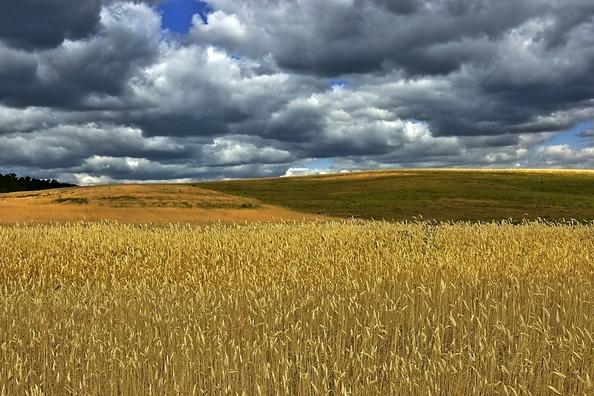 cornfield-4316900_960_720