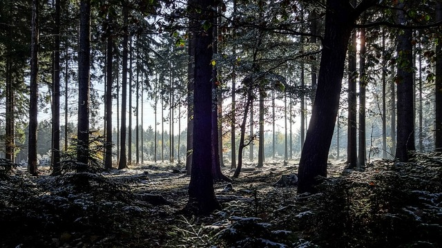 winter-forest-3131177_960_720
