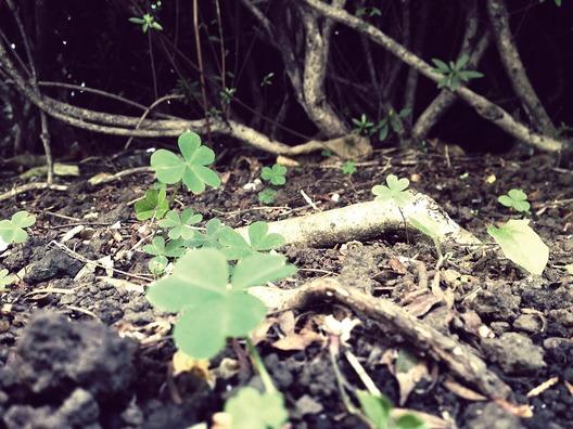 clover-393118_960_720