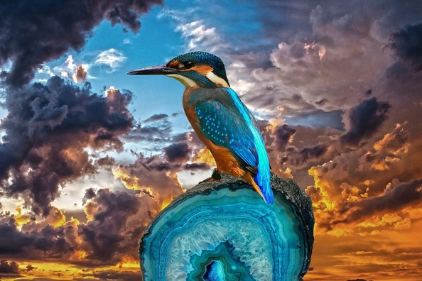 kingfisher-2046201_960_720