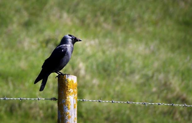bird-3909452_960_720