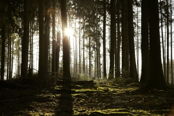 forest-4642021_960_720
