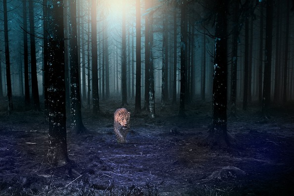 forest-3886273_960_720