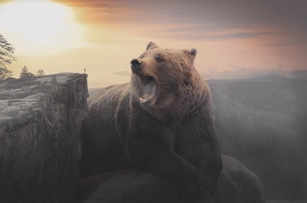 bear-3557102_960_720