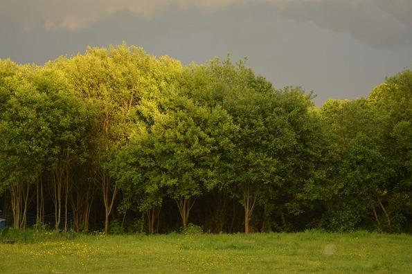 tree-3641874_960_720