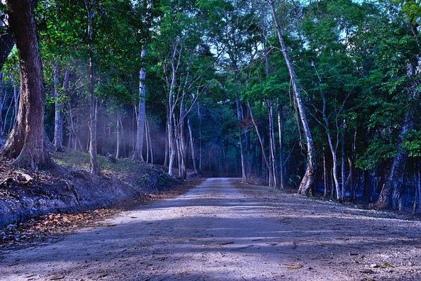 woods-3402137_960_720