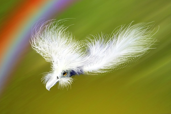 feather-396610_960_720