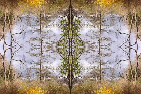 trees-1919352_960_720