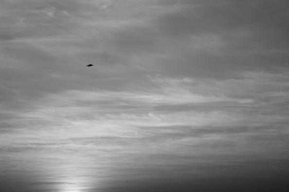 bird-166760_960_720