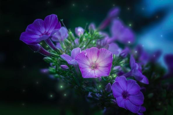 flowers-4398807_960_720