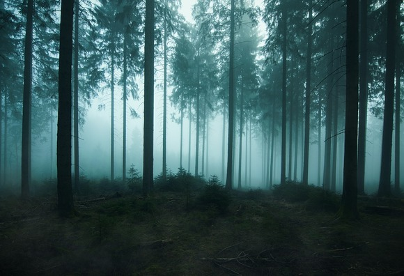 forest-4309913_960_720