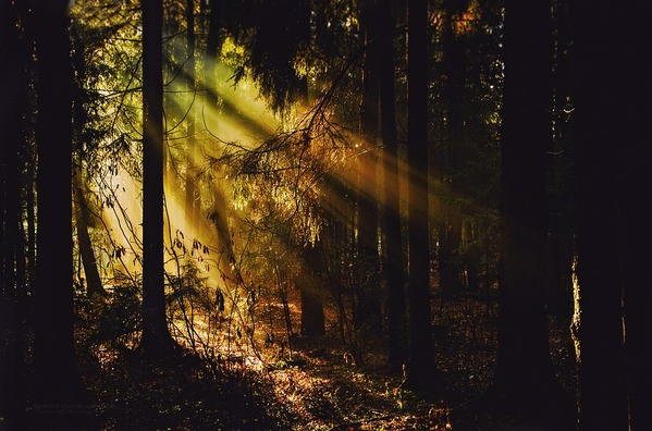 forest-4667144_960_720
