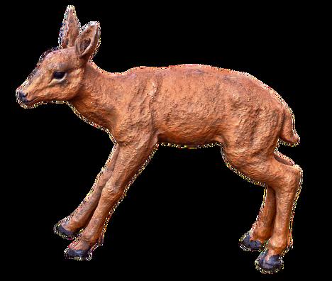roe-deer-3260969_960_720