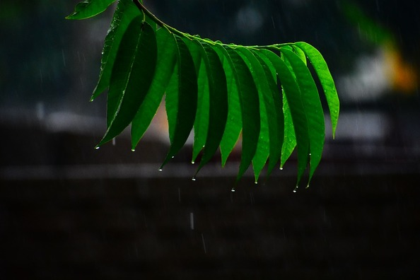 rain-3533857_960_720