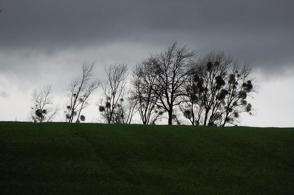 trees-1136709_960_720