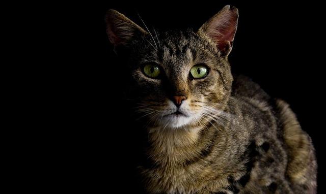 cat-987528_960_720
